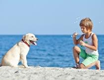 沙滩上吹泡泡的男孩与狗摄影图片