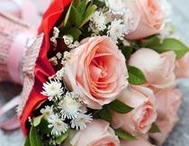 粉色玫瑰花束局部特写摄影图片