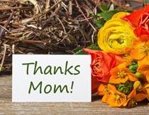 母亲节贺卡和漂亮的鲜花摄影图片