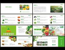 有机蔬菜画册设计模板矢量素材