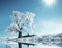 冬天在河边的大树主题影楼背景图片