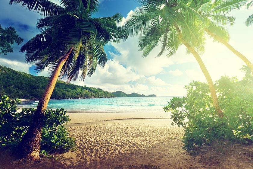树木阳光光芒大海风景海洋风景海岸风光海滩风景沙滩风景美丽景色风景