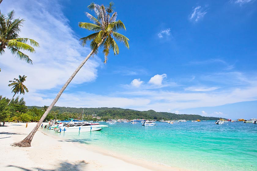 美丽的海滩椰树自然风景摄影图片