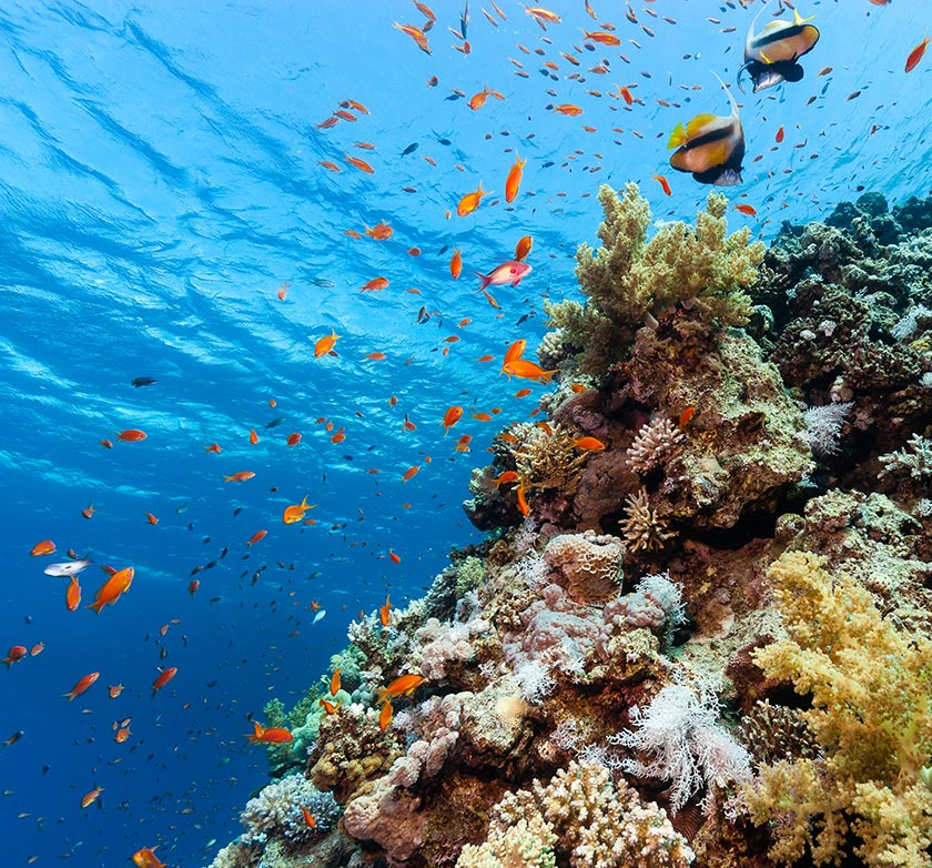 自然风光 > 素材信息   关键字栏: 近景特写写真大海海洋海水深海海底