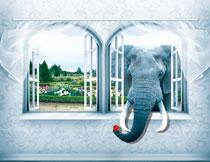 鼻子伸进到房间的大象影楼背景图片