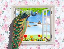停在窗台绳子上的孔雀影楼背景图片