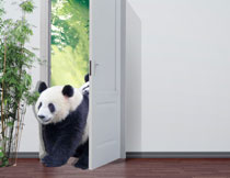 推门而进的大熊猫主题影楼背景图片