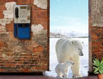 门口的两只北极熊影楼背景高清图片