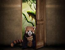坐在房门口的可爱浣熊影楼背景图片