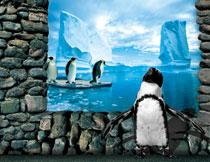 冰川上的企鹅立体创意影楼背景图片