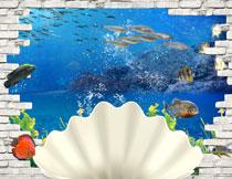 贝壳与游着的鱼群影楼摄影背景图片