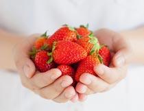 双手捧着的新鲜草莓局部摄影图片