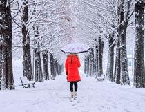 树林雪地上打伞的美女背影摄影图片