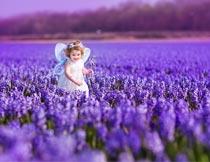 紫色花海里快乐的小女孩摄影图片