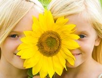 向日葵挡住脸的双胞胎女孩摄影图片