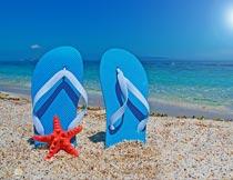 沙滩上蓝色拖鞋与红色海星摄影图片