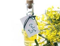 油菜花与玻璃瓶里的菜籽油摄影图片