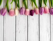 木板上方一排粉色的郁金香摄影图片