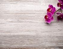 木板上美丽的紫蝴蝶兰花枝摄影图片