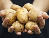 双手中的土豆食材原料特写摄影图片