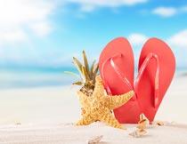 沙滩上的海星人字拖与菠萝摄影图片