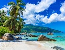 蓝天白云海岸沙滩岩石椰树摄影图片