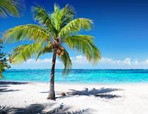 蓝天下白色沙滩椰子树风光摄影图片