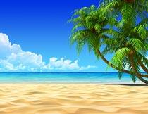 蔚蓝天空下的海滩椰树风光摄影图片