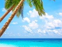 蓝天白云椰树与海岸风光摄影图片