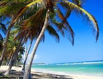 蔚蓝天空下的大海椰树风光摄影图片