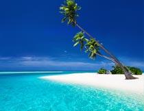 蔚蓝的天空与海岸椰树风光摄影图片
