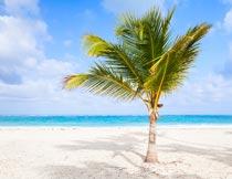 海边沙滩上阳光下一棵椰树摄影图片