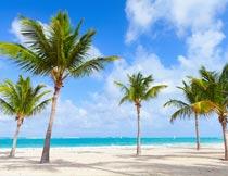 蓝天白云下的沙滩椰树风光摄影图片