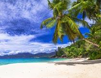 蔚蓝天空下的沙滩椰树风光摄影图片