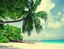 美丽的海岸沙滩椰子树风光摄影图片