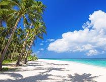 蓝天白云阳光沙滩椰树风光摄影图片