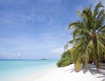 美丽海岸沙滩椰树自然景色摄影图片