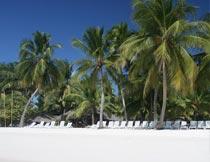 白色沙滩与休闲椅椰树风光摄影图片