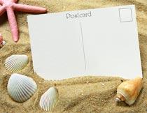 沙滩上的明信片与贝壳海螺摄影图片