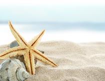 海边沙滩上的海螺与海星摄影图片