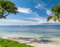 蓝天白云大海椰树自然美景摄影图片