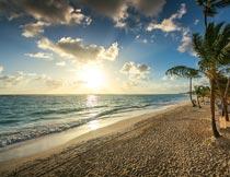 黄昏下美丽的海滩椰树风光摄影图片