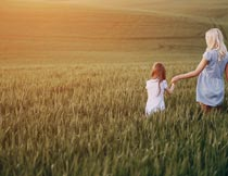黄昏麦田里牵手的母女背影摄影图片
