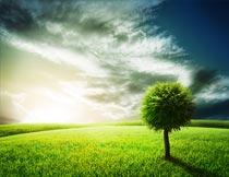 美丽夕阳下草地上的树木摄影图片