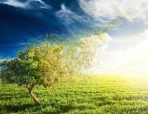 草地上叶子飞扬的树木美景摄影图片