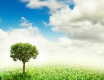蓝天白云下草地上的树木摄影图片