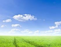 蓝天白云下的绿色草地美景摄影图片