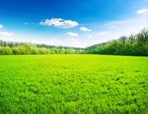 蓝天白云与草地树木美景摄影图片