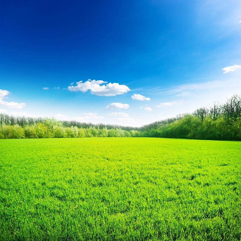 壁纸 草原 成片种植 风景 植物 种植基地 桌面 840_840