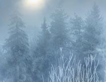 冬日暖阳清晨树林里的树挂摄影图片